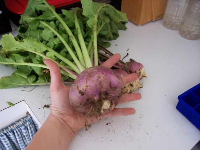 Huge Turnip