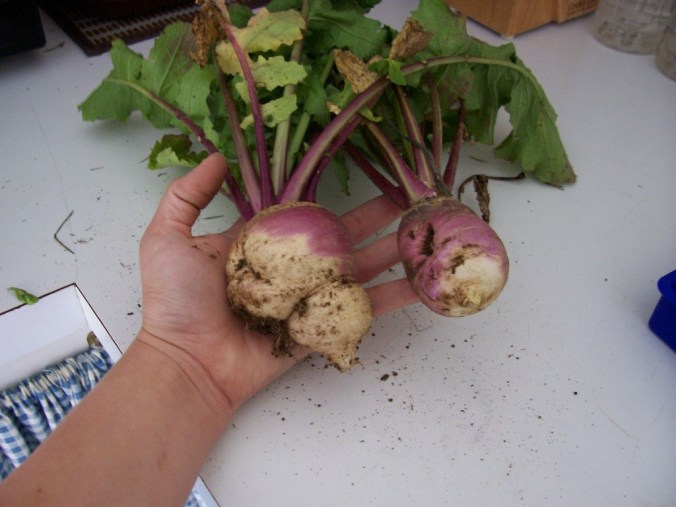 Weird Turnips